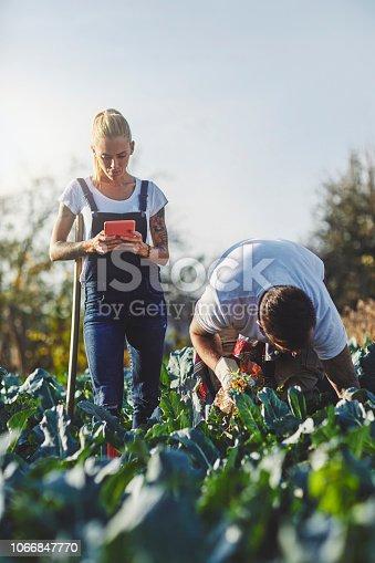 1063236916 istock photo Family Life On The Organic Farm 1066847770