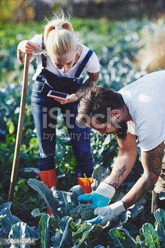 1063236916 istock photo Family Life On The Organic Farm 1066847934