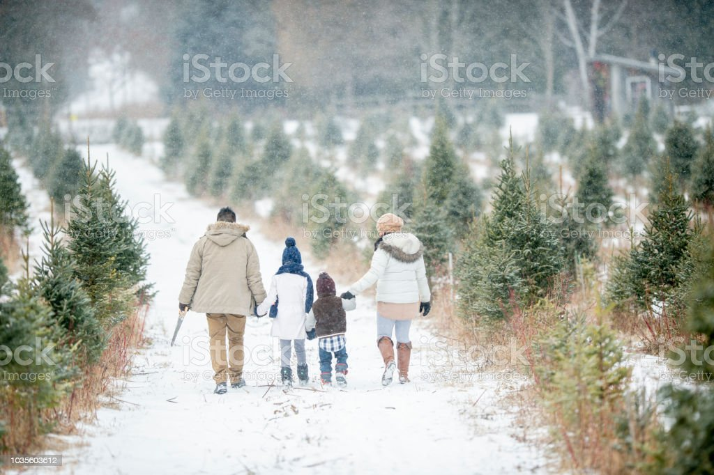 Family Looking For A Tree stock photo