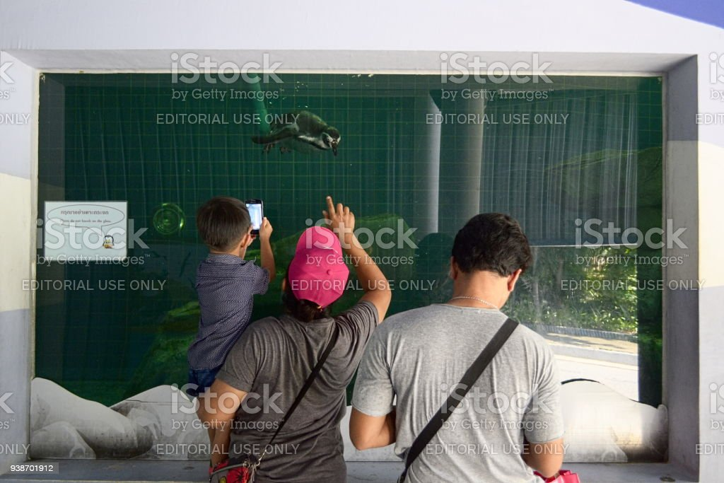 Family looking to penguins in zoo stock photo