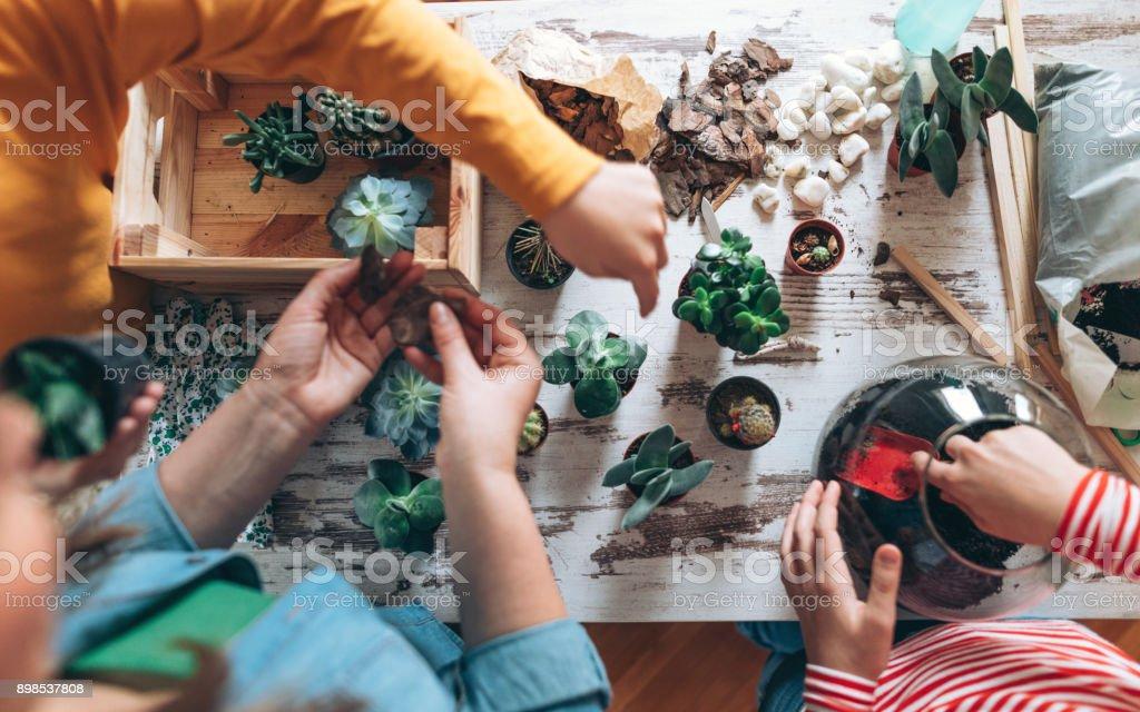 Familie Terrarium zu Hause – Foto