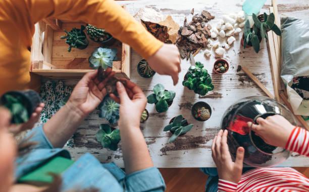 familie terrarium zu hause - terrarienpflanzen stock-fotos und bilder