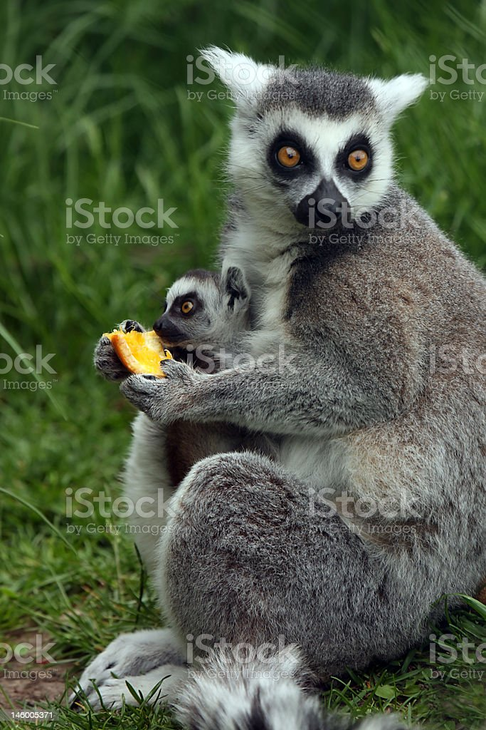 Family Moment royalty-free stock photo
