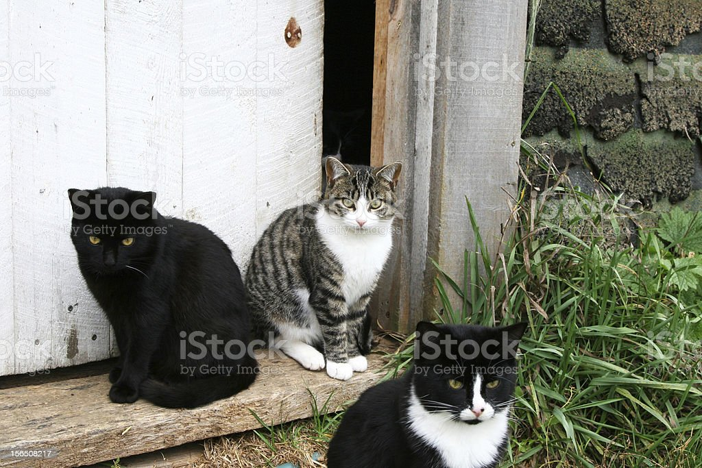 Family of cats in the doorway royalty-free stock photo