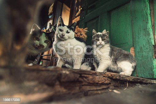 A family of cats stares curiously at the camera.  Shot at high ISO with slight grain.