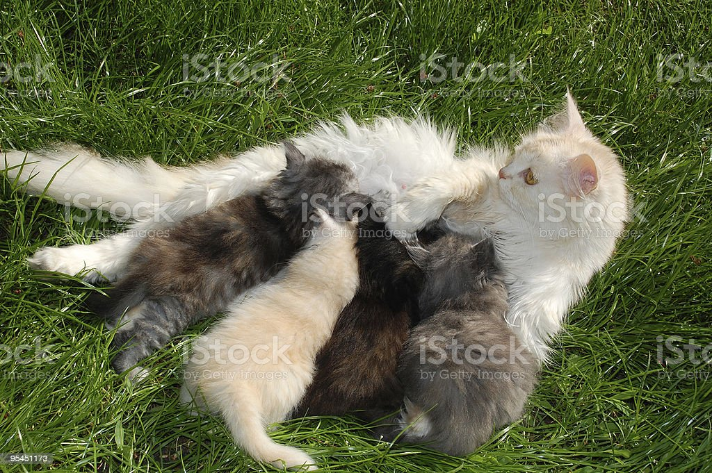 family of cats royalty-free stock photo