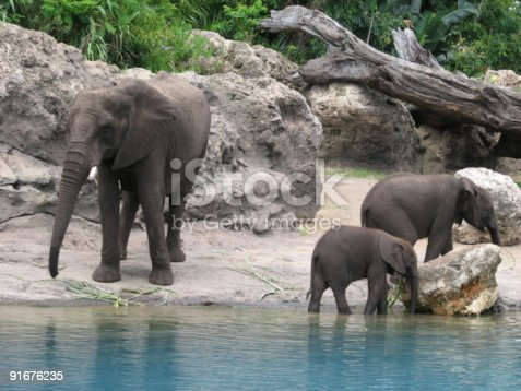 istock Family of elephants beside body of water with two juveniles 91676235