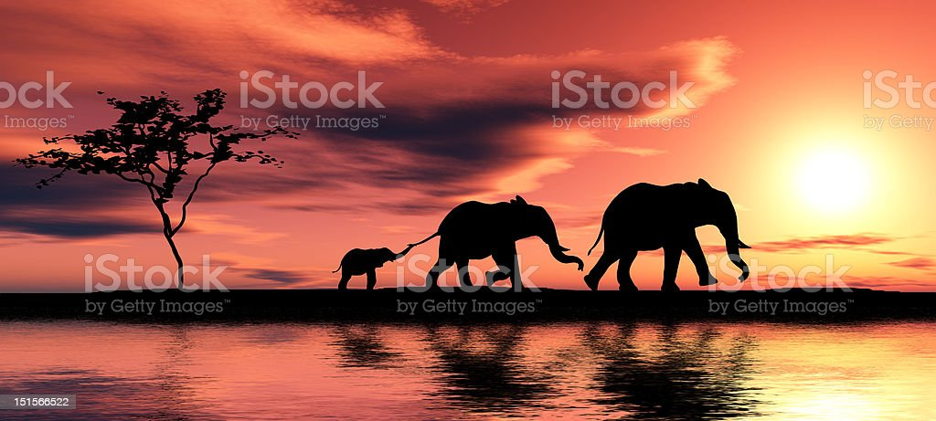 Family of elephants. stock photo