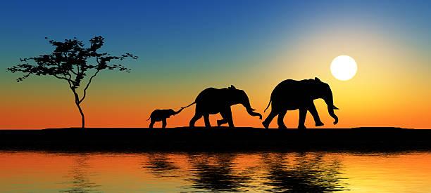 familie der elefanten. - elefanten umriss stock-fotos und bilder
