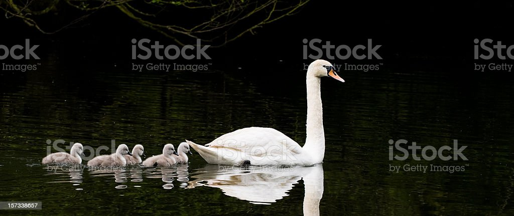 family of five! stock photo