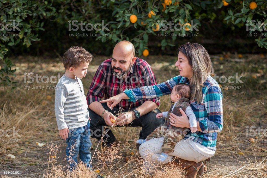 Family of four enjoys eating an orange stock photo