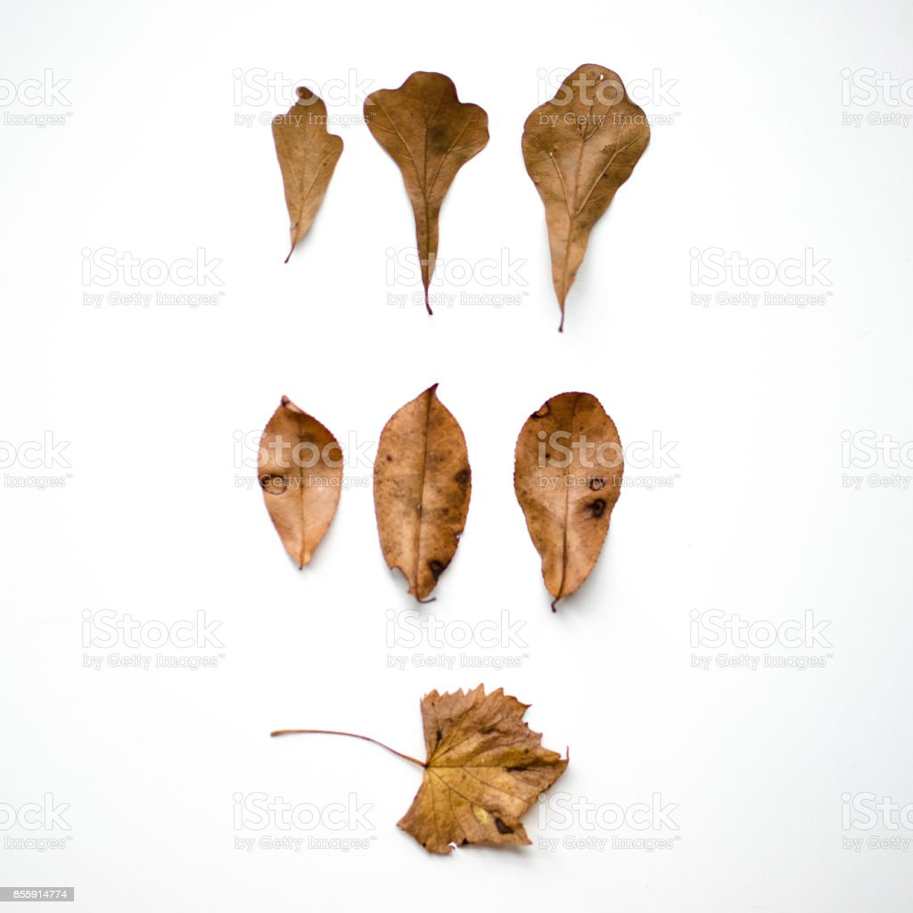 Family of Leaves stock photo