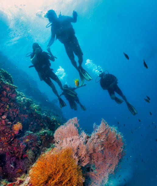 Family of Scuba Divers on vibrant coral reef stock photo