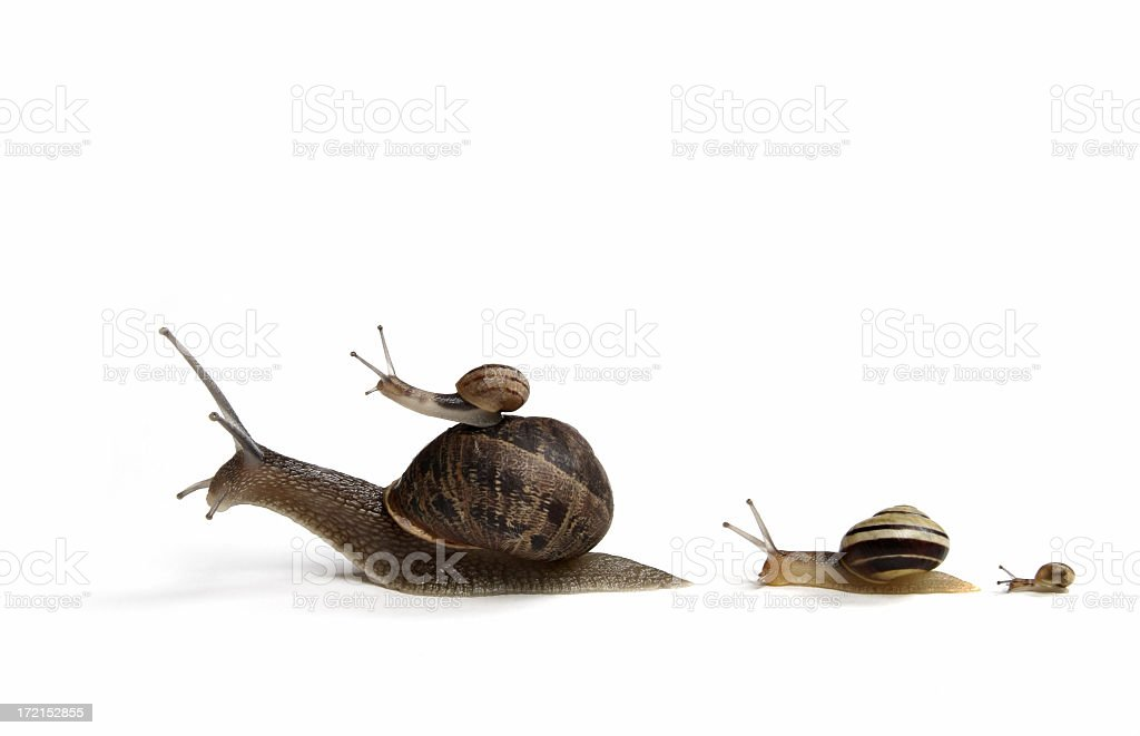 Family of Snails royalty-free stock photo