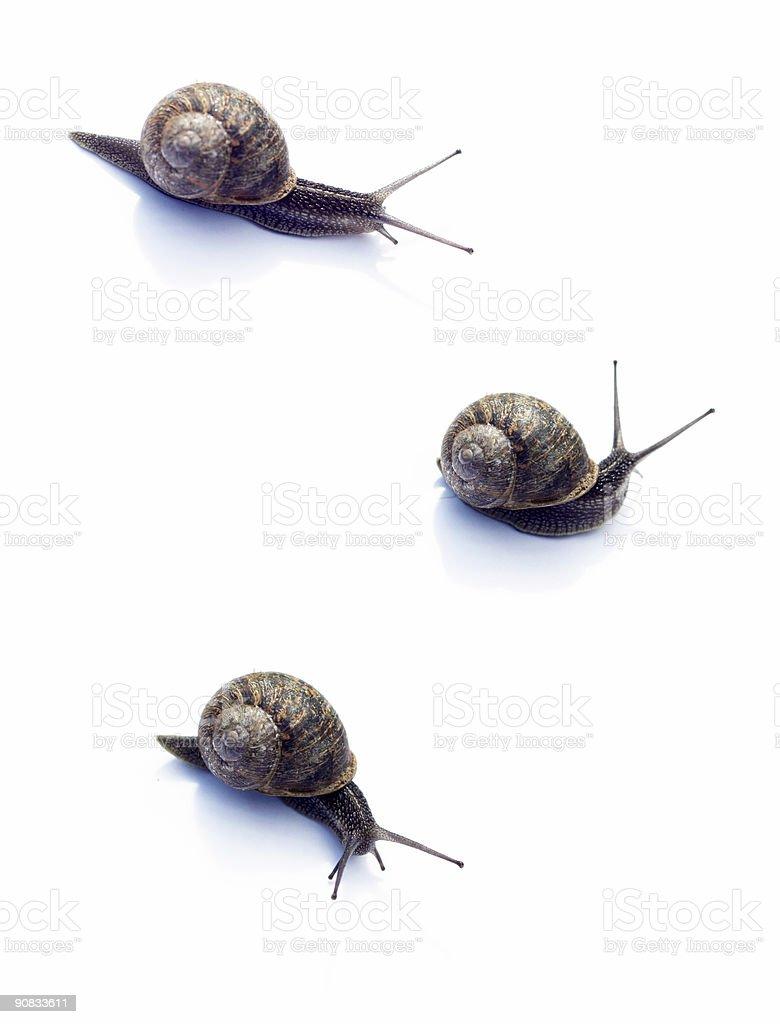 Family of Snails royalty-free stock photo