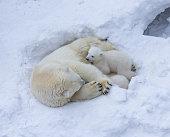 Polar bear in the tundra of Churchill, Canada.  Nikon D300 with 400mm f/2.8.
