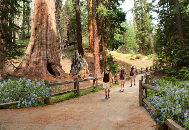 Family on hiking trip in the forest on summer vacation. stock photo