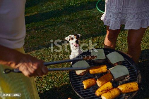 istock Family on picnic 1033104362