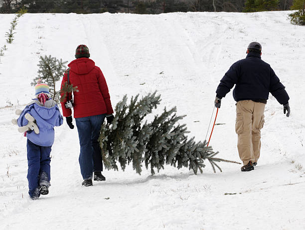 Family outing to cut their Christmas Tree stock photo