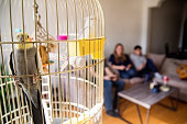 Family parrots in cage with teenage boy showing mother how to play video games in small city apartment self-isolating from Covid-19 in background. Horizontal waist up indoors shot with copy space.