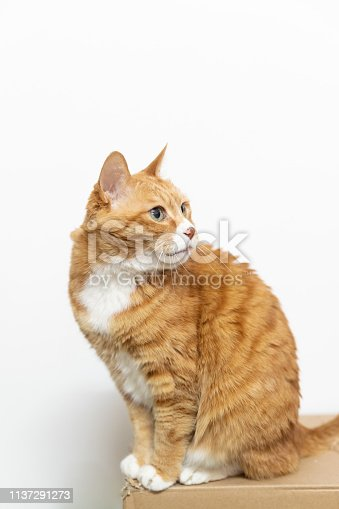Family pet cat,Chinese garden cat