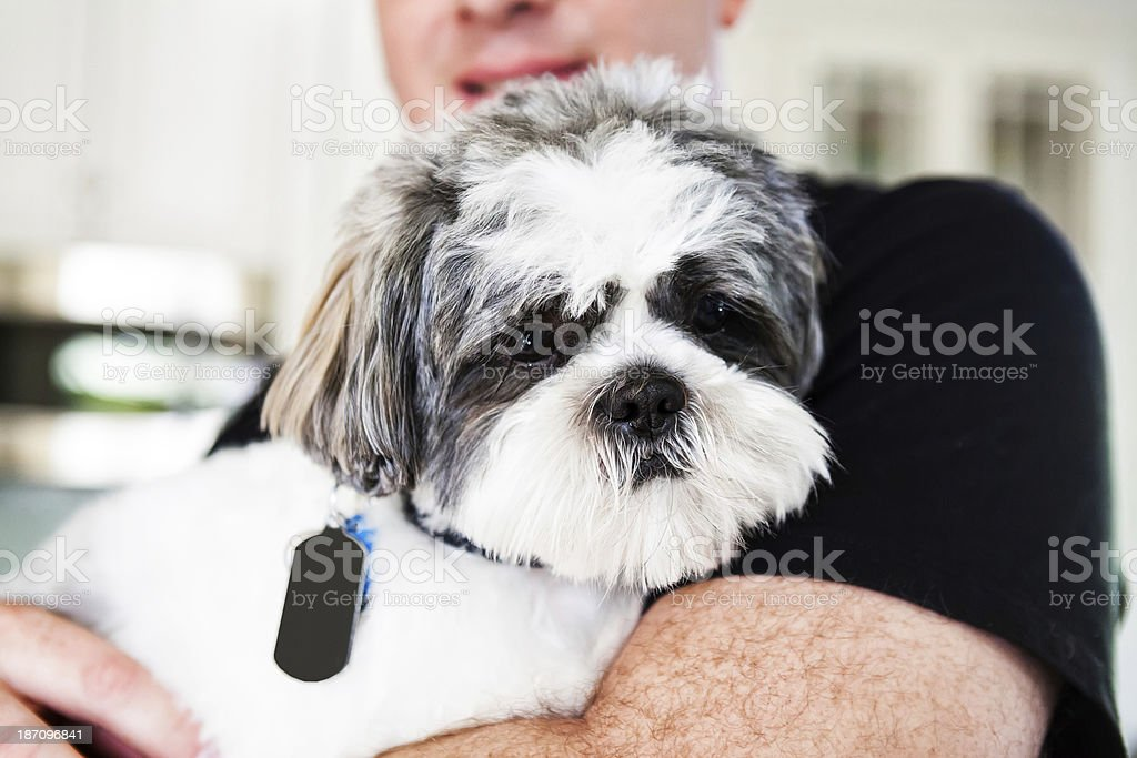 Family pet dog with collar and tags royalty-free stock photo