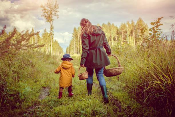 familjen plocka svamp i skogen - höst plocka svamp bildbanksfoton och bilder