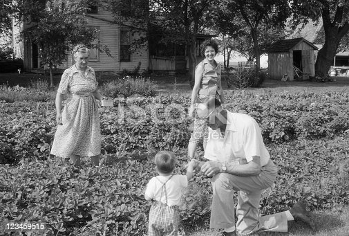 Grandfather is showing grandson how to eat strawberries as you pick them. Grandmother and mother look on. Iowa, 1960. Scanned film with grain.