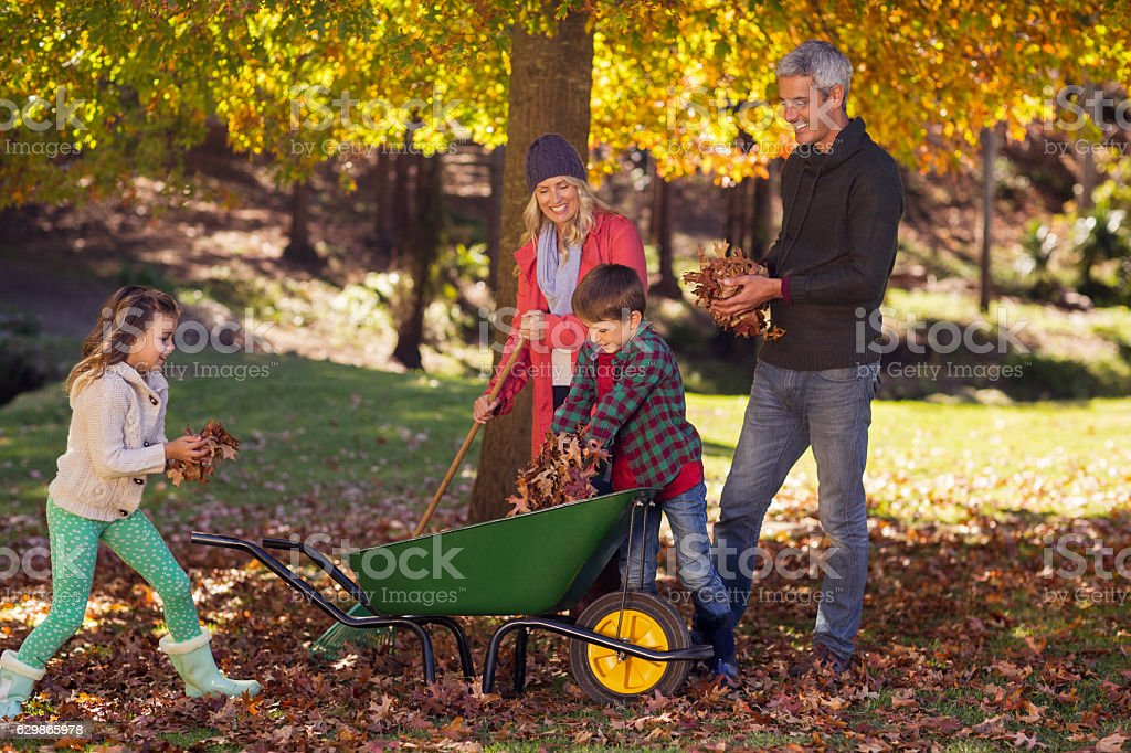 Family picking up autumn leaves stock photo