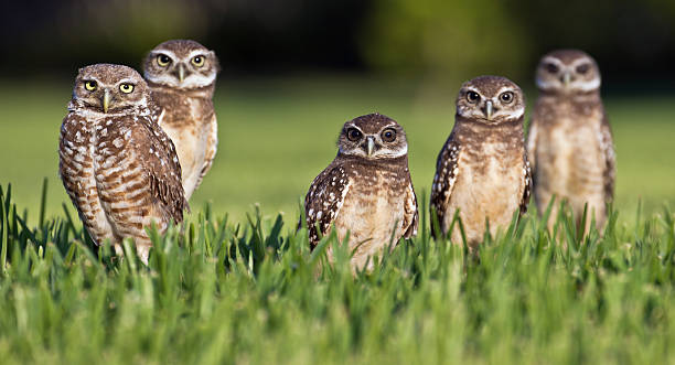 Family picture of five owls outside picture id120891450?b=1&k=6&m=120891450&s=612x612&w=0&h= xqsn 03tefhs29n99uzomuuq6u5quwncszihpswdfs=