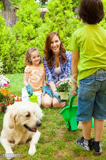 istock Family Planting Flowers Together. 175413577