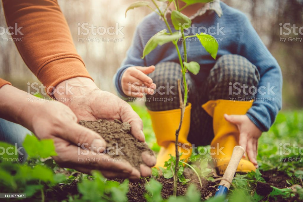 Little boy and his father gardening in spring