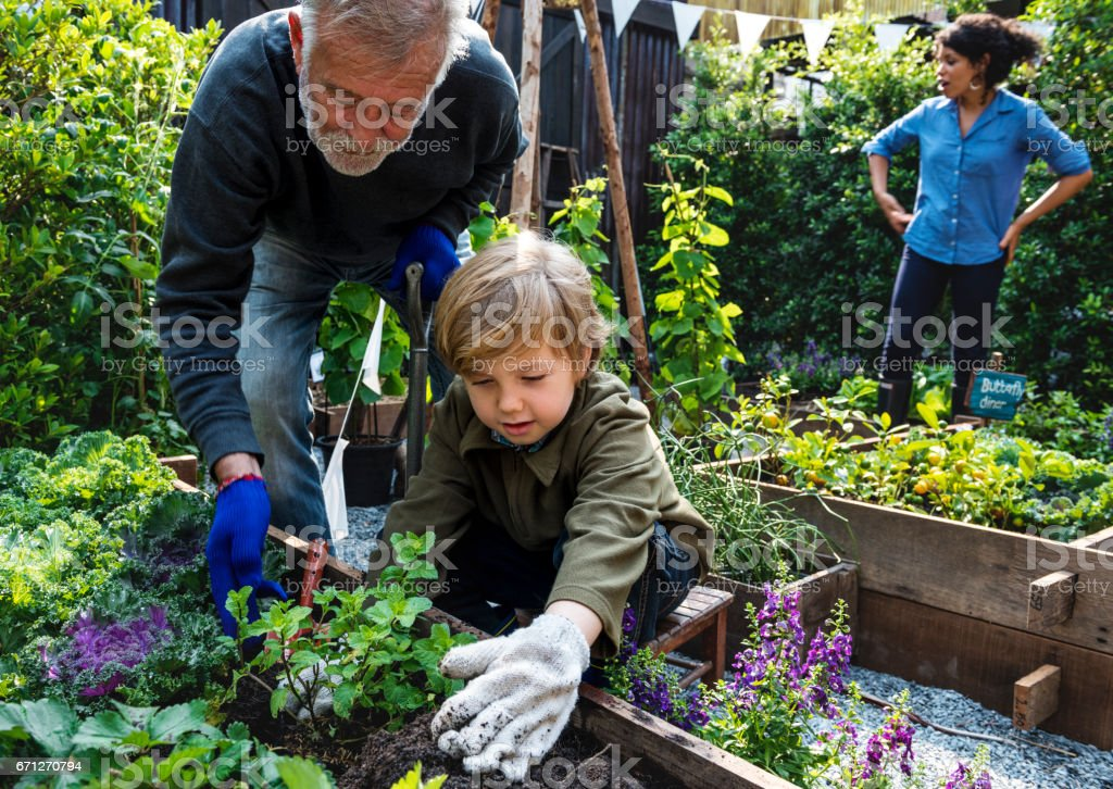 Family planting vegetable from backyard garden - Photo