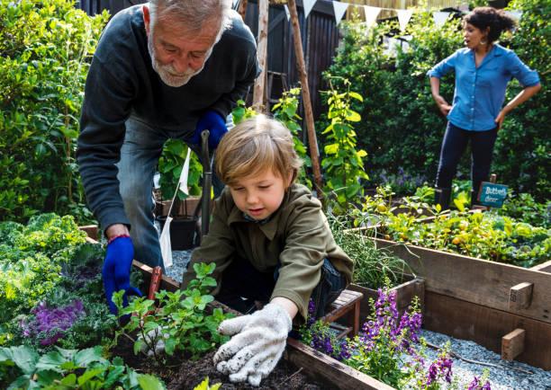 Family planting vegetable from backyard garden – Foto