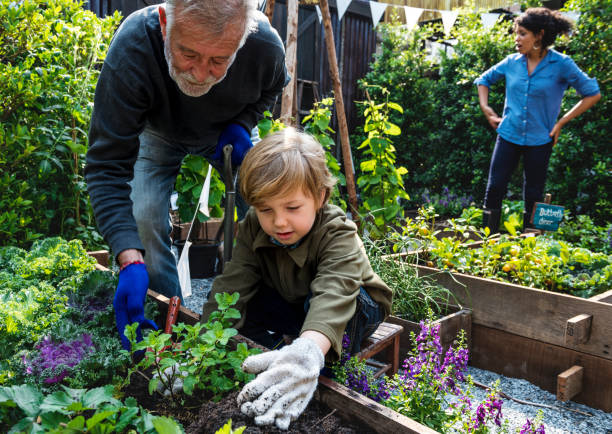 Family planting vegetable from backyard garden stock photo