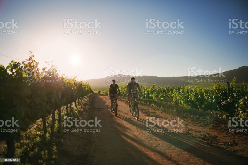 Family ride through the vineyards stock photo