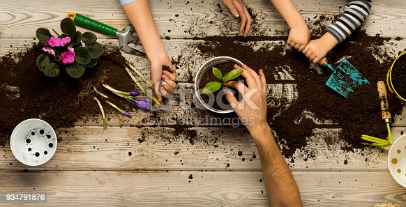 istock Family sits flowers in a pot. Spring and hobbies, family grows flowers together. Beauty and nature. Hobby home for whole family, entertainment with children, development and education. Flower ground 934791876