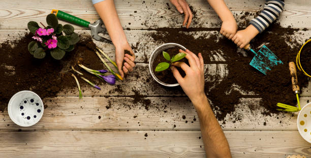 Family sits flowers in a pot. Spring and hobbies, family grows flowers together. Beauty and nature. Hobby home for whole family, entertainment with children, development and education. Flower ground stock photo