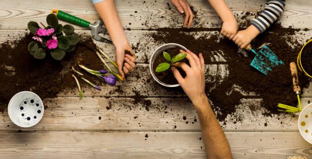 一家人在花盆裡坐著花。春天和愛好, 一家人一起種花。美麗和自然。愛好家庭為全家, 娛樂與兒童, 發展和教育。花卉地面 - 園藝 個照片及圖片檔