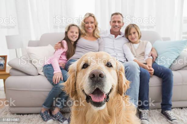 Family sitting on the couch with golden retriever in foreground picture id518314561?b=1&k=6&m=518314561&s=612x612&h=f45ca0jk7icswfxnt8mr5 uvtrxwhjnmzx9ib9zz5eq=
