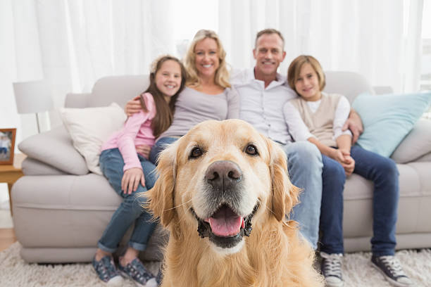 Family sitting on the couch with golden retriever in foreground picture id518314561?b=1&k=6&m=518314561&s=612x612&w=0&h=dpjp8ncuyambs5x08lgyd4he tpxsgvo9z8 vw bm g=