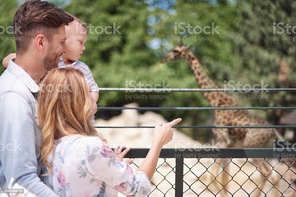 Famiglia trascorrere la giornata allo zoo foto stock royalty-free