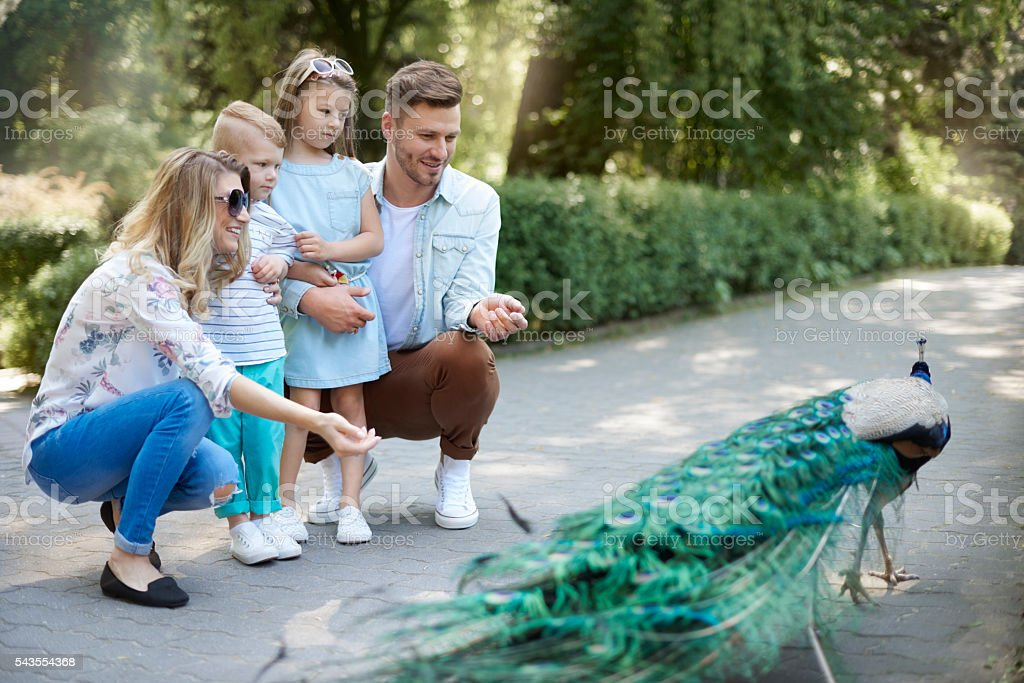 Family spending day at the zoo royalty-free stock photo