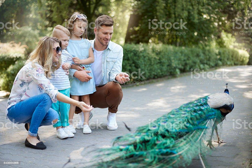 Familia pase el día en el zoológico - foto de stock