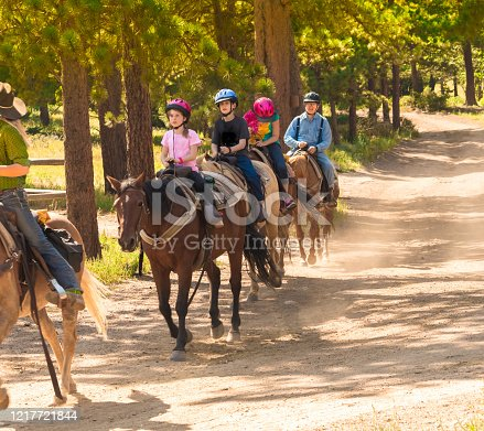 Family taking a horseback riding  lesson in the woods in the Rocky Mountains, Colorado, USA, in summer