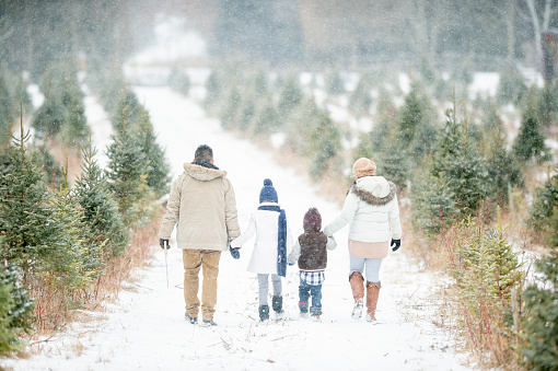 A cute little family walks through a snowy Christmas tree farm. They are all holding hands and are dressed warmly.