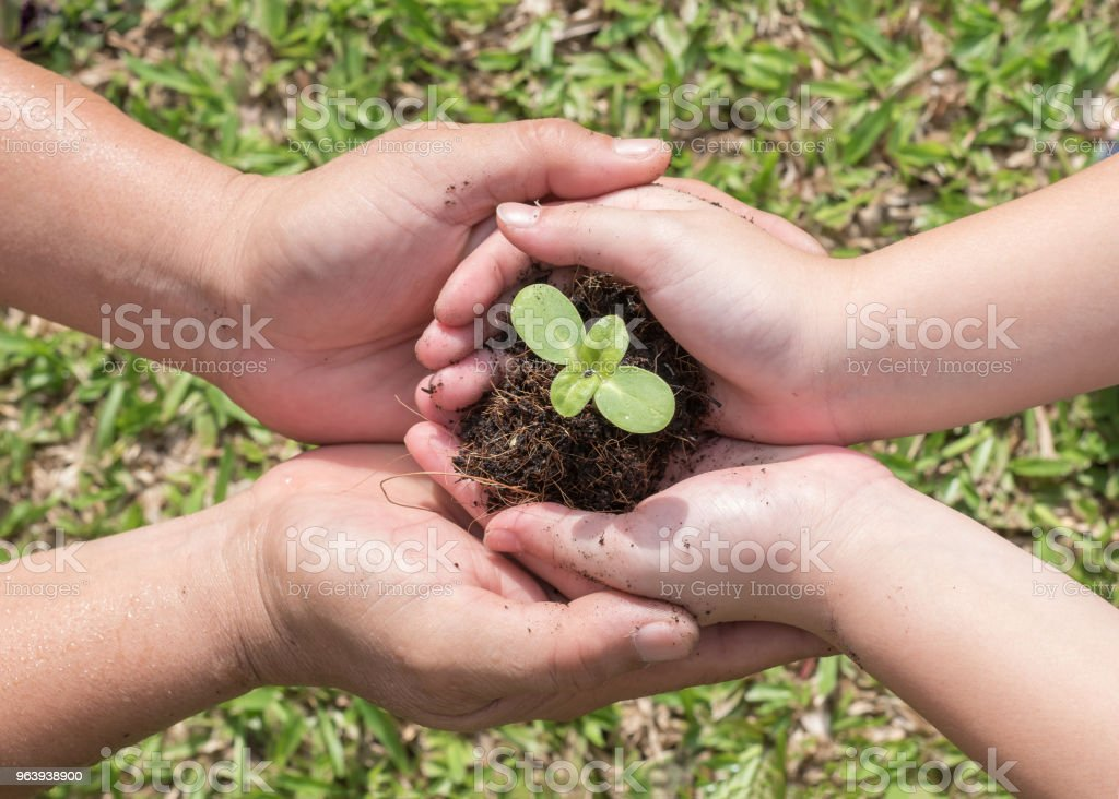 Family tree planting and world environment day concept with young child kid and parent mother's or father's hands holding and protecting small plant seedling on soil together - Royalty-free Agriculture Stock Photo