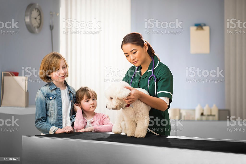 family trip to the vets stock photo