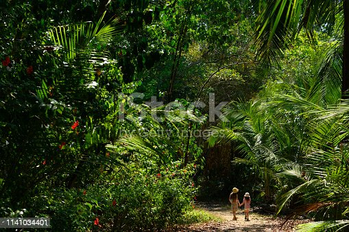 istock Family vacation in a tropical climate 1141034401