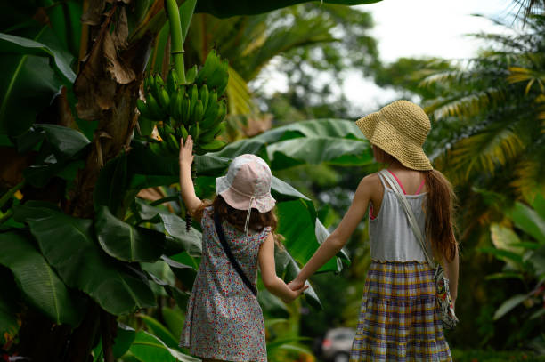 Family vacation in a tropical climate Children touching bananas in the tropical climate of Costa Rica arenal volcano stock pictures, royalty-free photos & images